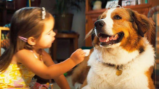Собачья жизнь 2 — продолжение семейной драмы 2017 года.