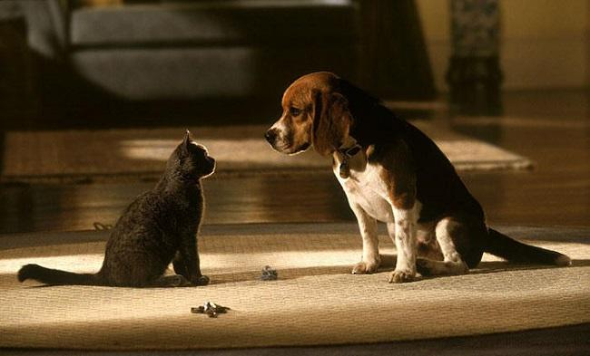 Кошки против собак 3 — дата выхода продолжения фильма 2010 года