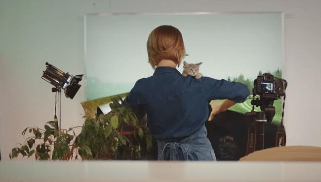 Котики 2 сезон — дата выхода, описание серий, анонс